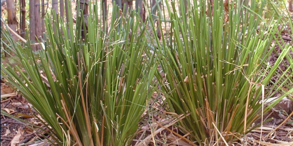 vetiver-essential-oil-anxiety