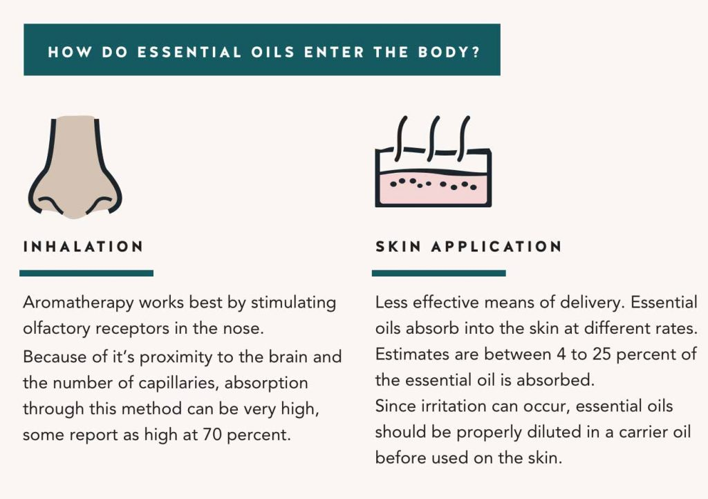 how-essential-oils-enter-the-body