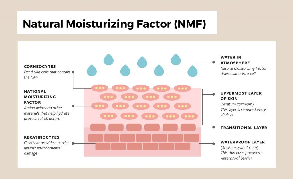Natural-Moisturizing-Factor Diagram
